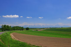 FURANO summer. Blue sky with green meadows in FURANO Royalty Free Stock Photography