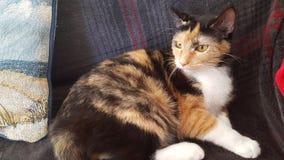 Furball. Cat female cute pet daytime Stock Photo