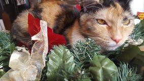 Furball. Pet Christmas decoration daytime Royalty Free Stock Photography