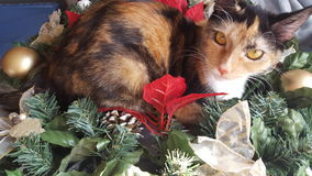 Furball. Pet cute Christmas decorations Royalty Free Stock Photos