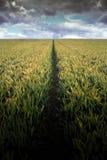 Furche auf dem Weizengebiet lizenzfreie stockfotografie