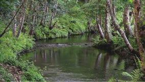 Furche mit einem langsamen Strom in einem tiefen Wald stock video