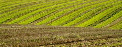 Furchen in einem Feldlandwirtschaftsboden Lizenzfreies Stockfoto