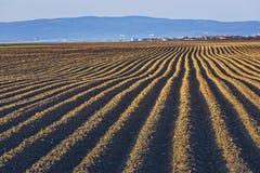 Furchenreihen auf dem Kartoffelgebiet Lizenzfreie Stockfotografie