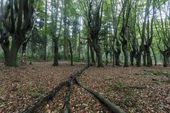 Furchtsame Bäume in Zwolle-Bereich Lizenzfreies Stockbild
