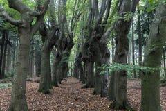 Furchtsame Bäume in Zwolle-Bereich Lizenzfreie Stockfotografie