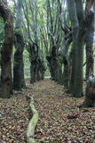 Furchtsame Bäume in Zwolle-Bereich Stockfotografie