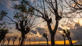 Furchtsame Baum-und Wolken-Zeitspanne während des goldenen Sonnenaufgangs stock footage