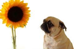 Furchtsame Blume Lizenzfreie Stockfotografie
