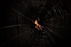 Furchtsame haarige Spinne im Netz nachts Stockbilder