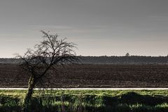 Furchtsame Szene des getrockneten alten Baums durch ein Feld Stockfotografie