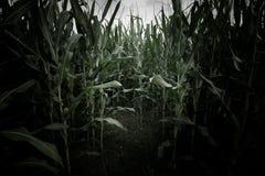 Furchtsame Szene des Weizenfeldes stockbilder