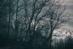 Furchtsame undeutliche künstlerische Baumschattenbilder Stockfoto