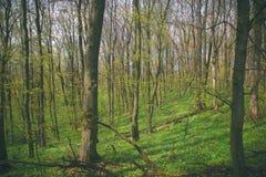 Furchtsamer Baum im Wald Lizenzfreie Stockbilder
