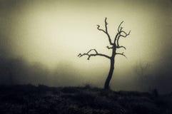 Furchtsamer einsamer bloßer Baum Stockbild
