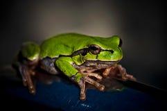 Furchtsamer kleiner Frosch Lizenzfreie Stockfotografie