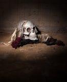 Furchtsamer menschlicher Schädel Stockfotografie