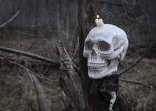 Furchtsamer menschlicher Schädel auf dem Baum Stockbild