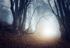 Furchtsamer mysteriöser Wald im Nebel im Herbst Magische Bäume Lizenzfreie Stockfotos