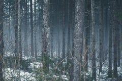 Furchtsamer nebelhafter Wald des Winters stockbild