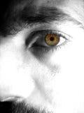 Furchtsames Portrait Stockbilder