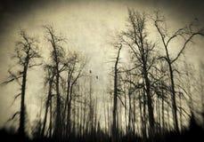 Furchtsames Winterholz Stockfoto