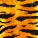 Fure della tigre Fotografia Stock