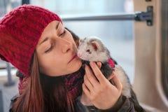 Furet courageux d'animal familier sur un tram de ville et son propriétaire Photo stock