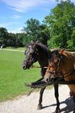 Furgonów konie Obraz Royalty Free