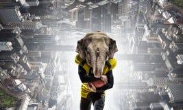 Furious elephants team Royalty Free Stock Photos