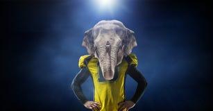 Furious elephants team Stock Image
