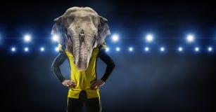 Furious elephants team Stock Images