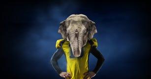 Furious elephants team Royalty Free Stock Photography