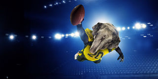 Furious elephants team Royalty Free Stock Image