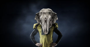 Furious elephants team Stock Photo