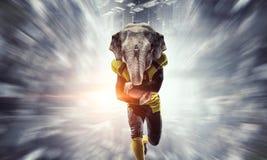 Furious elephants team . Mixed media Stock Image