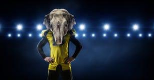 Furious elephants team . Mixed media Stock Photos