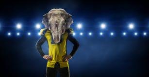 Furious elephants team . Mixed media Royalty Free Stock Photos