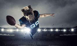 Furious rhinos team . Mixed media. American football player with rhino animal head. Mixed media Royalty Free Stock Images