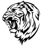 Tiger head vector. Furious tiger illustration - realistic black and white outline of animal head Stock Images