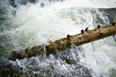 Furious Water. The Flood. Flooding Water and Tree Closeup. Fast and Furious Water. Power of the Nature Stock Image