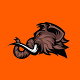 Furious woolly mammoth head sport vector logo concept isolated on orange background. Stock Images