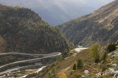 Furka and Grimsel passes at their start in the Swiss valley. Pine trees and morning light Royalty Free Stock Image