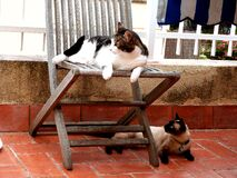 The furkids playfighting outside Royalty Free Stock Photo