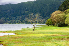 Furnas Lake in Sao Miguel royalty free stock photography