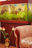 Furniture and aquarium Royalty Free Stock Images