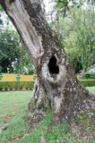 Furo da árvore Imagens de Stock Royalty Free