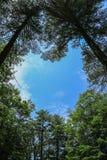 Furo das árvores Foto de Stock Royalty Free