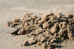 Furo de escavação do caranguejo na areia na praia imagens de stock royalty free