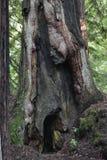 Furo de Hobbit fotografia de stock royalty free